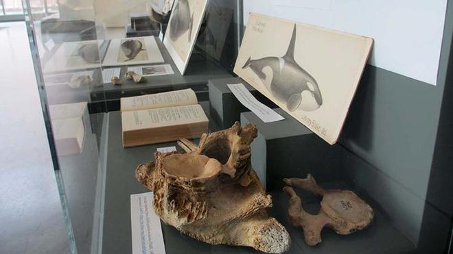 exhibit cases containing whale bones, books and illustrations