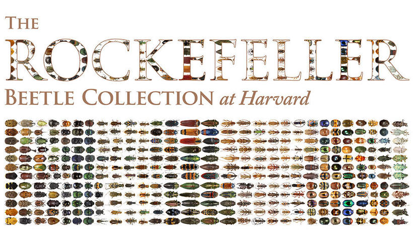 Rockefeller name made up of colorful beetles
