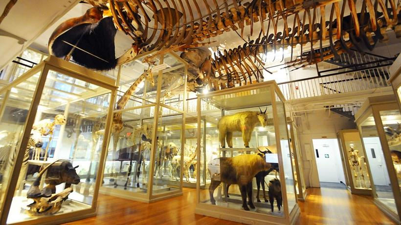 Oxford Natural History Museum Shop