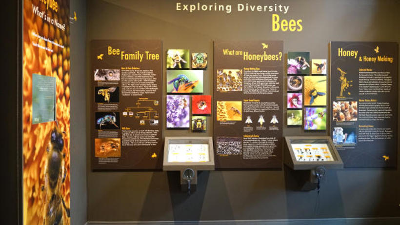 Image of the Bee exhibit at the Harvard Museum of Natural History