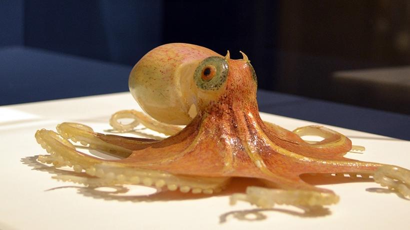 Orange Sea Creatures Sea Creatures in Glass
