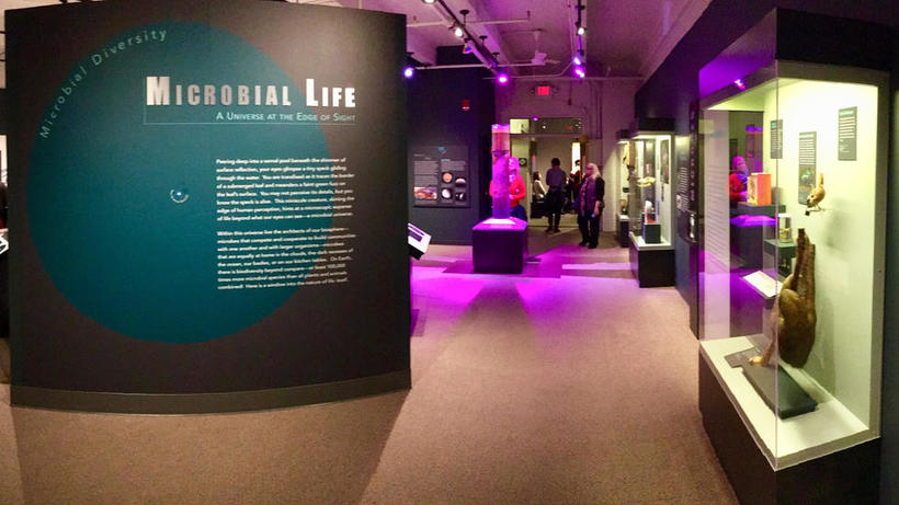 Image of Microbial Life exhibit
