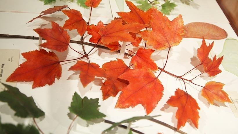 Glass Red Maple Leaves