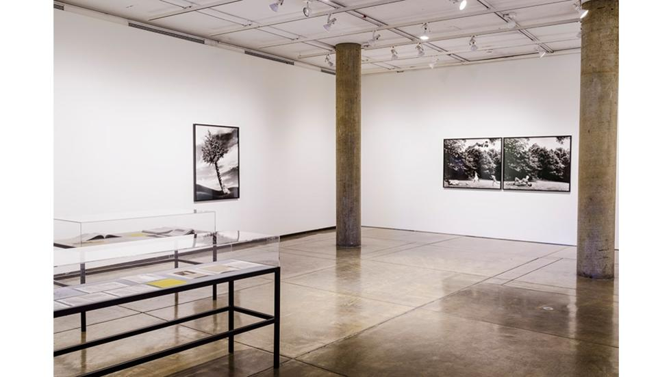 03/05 Installation view of The Fir-Palm 1991/2012 and Body/Ground 1991/2012, courtesy Alexander Gray Associates, New York