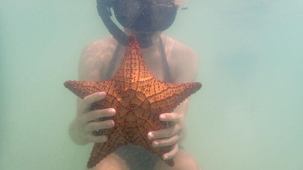 Student wearing a snorkle, holding a starfish up, underwater
