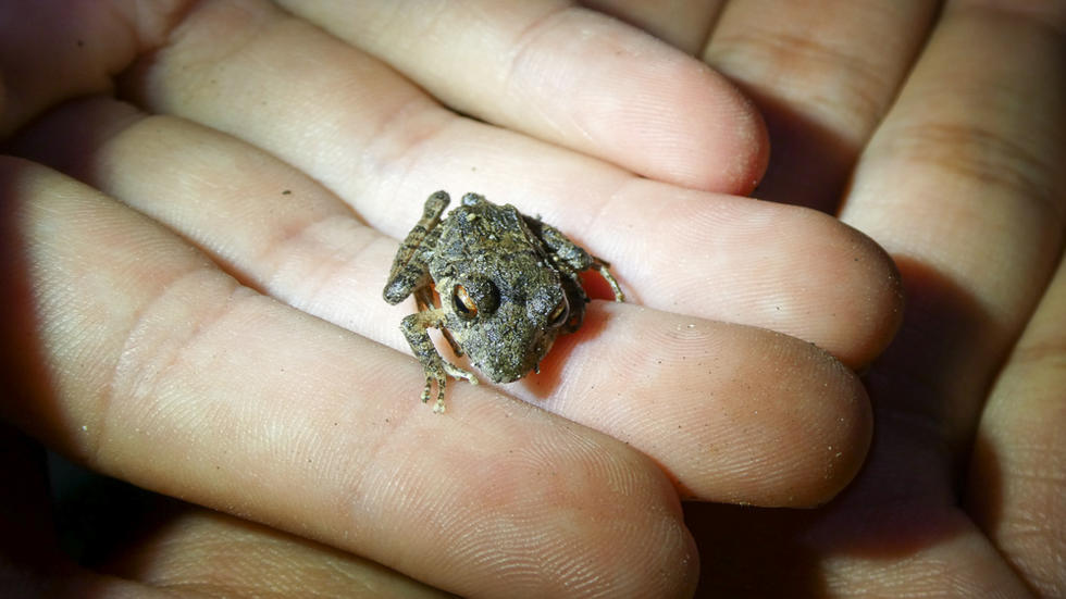Frog sitting on a single finger of an open hand