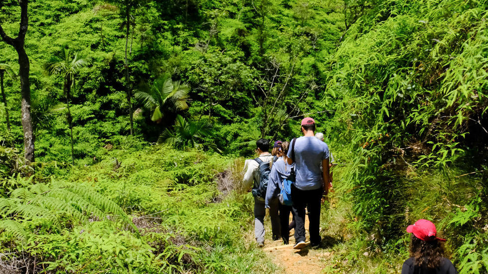 Backs of line of students hiking down mountain, surrounded by lush green palms and ferns