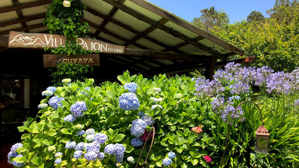 Blue hydrangeas in foreground, roof of eco-lodge behind it, with sign stating Villa Pajon