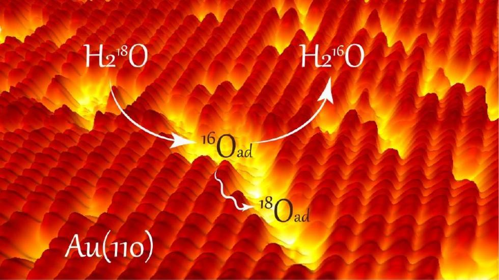Water facilitates oxygen mobility on gold surfaces via transient hydroxyl pairs