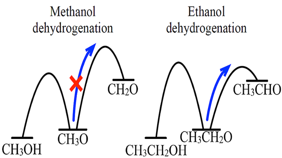 Reaction of methoxy to formaldehyde has a high-energy transition state, in contrast to that in the longer chain systems.