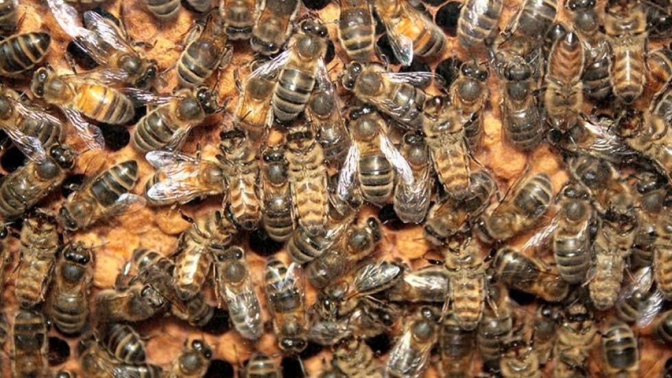 image of bees in a hive