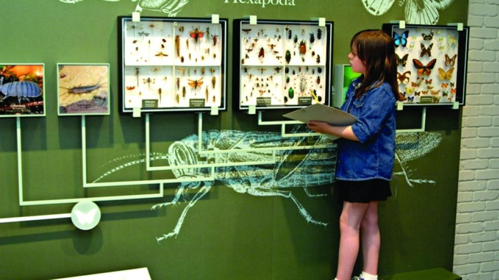 Child with a clipboard examining a display of beetles.