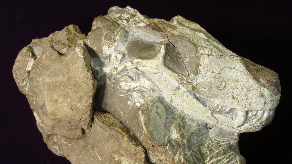 Vertebrate Paleontology Museum Of Comparative Zoology