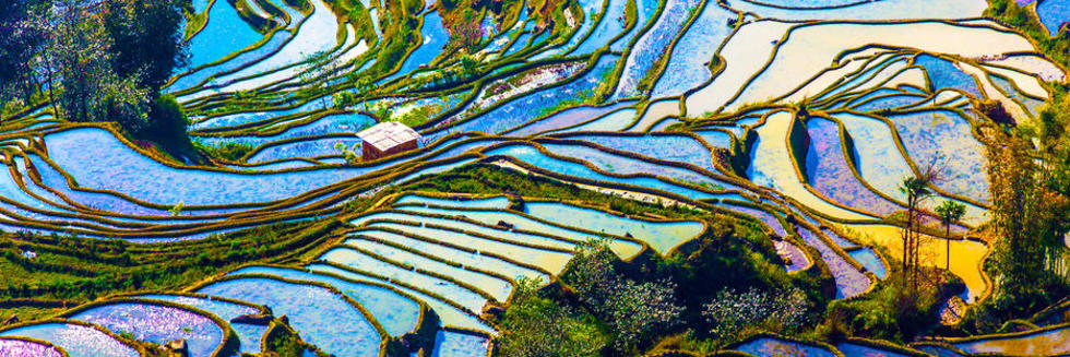 China Project - Rice Terraces