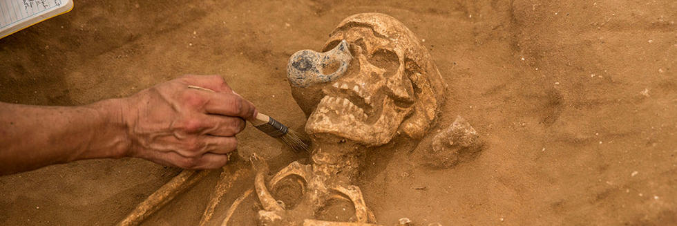 Skeleton from the excavation of the Philistine cemetery