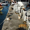 Cats lounging at the Cunda harbor.