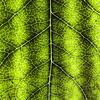 Nocera's artificial and bionic leaf technology could transform the energy industry