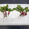 Radishes, grown with the Nocera group's biofertilizer (right) and without