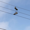 shoes on a wire monumental black body