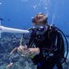 Harvard research explores impact of coral restoration