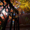 Harvard gate in fall
