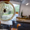 Local students got up close with spiders at the Harvard Ed Portal
