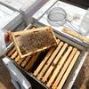 Beehive frame covered in bees, atop open commercial hive, research tools to right