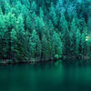 green and teal forest with complimentary lake.