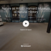 Nature as Artist, a virtual tour at the Harvard Museum of Natural History