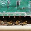 Bee Sensors by Jacob Peters